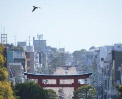 神社から見る鎌倉市の景色